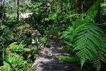 Tree ferns on a garden pathway at Bellawongarah